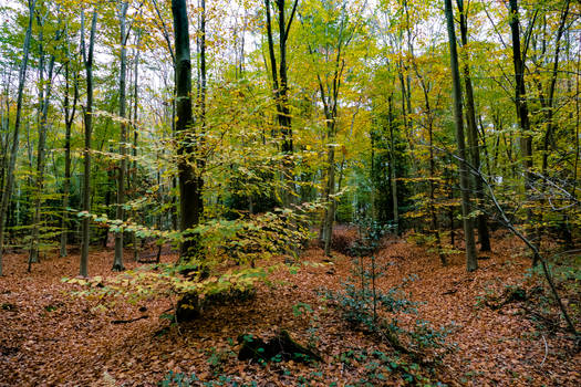 Trees autumncolors