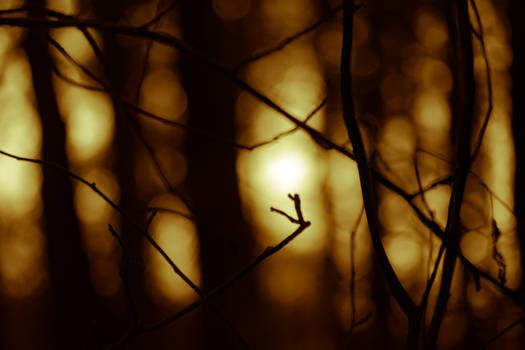 Illuminated bokeh forest