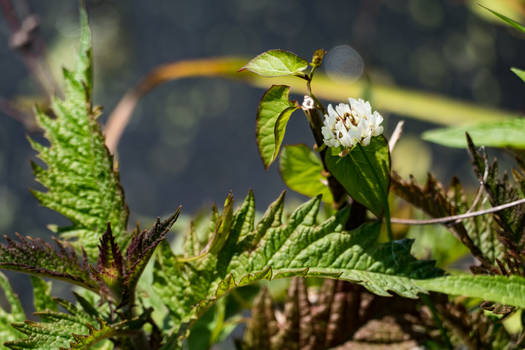 Wild growth waterside