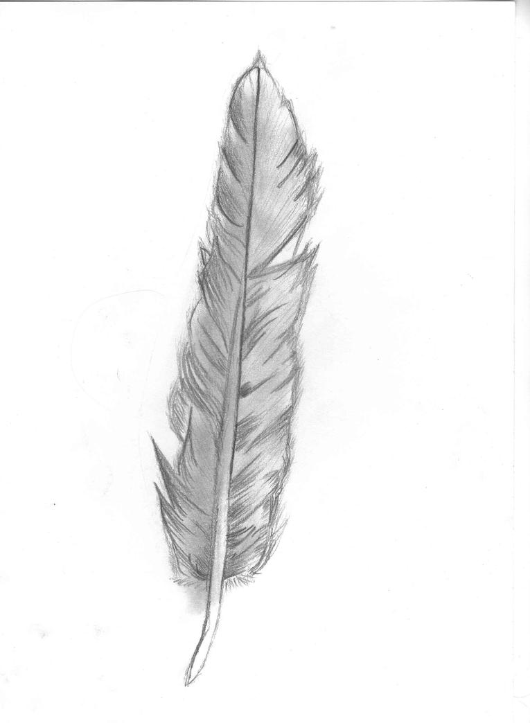 Displaying 20 gt  Images For - Feather Drawings Tumblr   Eagle Feather Pencil Drawing