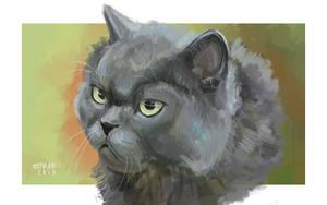 Speedart cat