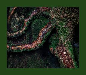 Roots II by PeterLovelock