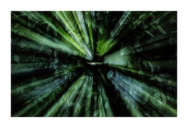Leaf Rays 1 by PeterLovelock
