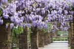 Wisteria Gardens II