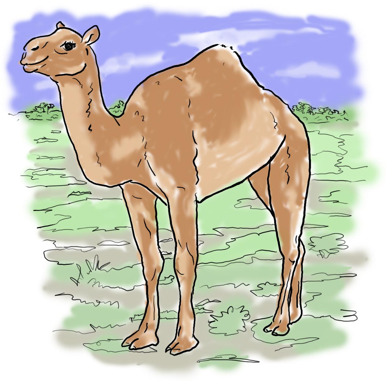 Camel by jennyweatherup