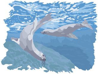 Sea Lions by jennyweatherup