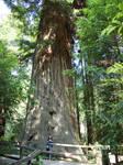 Brotherhood Tree