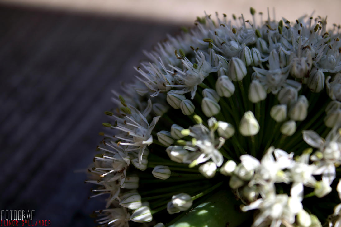 A ball of flowers by Sockeri