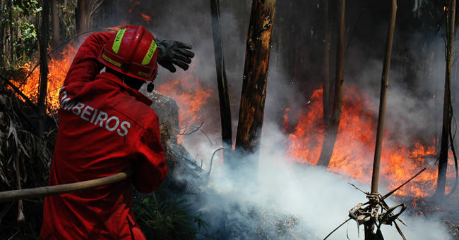 Forest Fires 1 by leonidas187