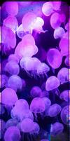 Purple Jellyfishes