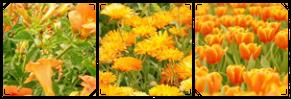 Orange Flowers by MissToxicSlime