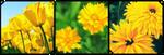 Yellow flowers by CosmicStardustTea