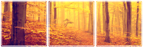 https://orig00.deviantart.net/daf0/f/2017/143/4/a/autumn_forest_by_misstoxicslime-dba6spq.png