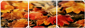 Autumn Leaves by MissToxicSlime