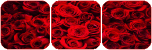 Red Roses Divider by MissToxicSlime
