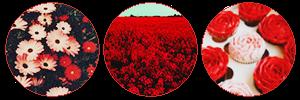https://orig00.deviantart.net/7430/f/2018/083/2/d/red_flowers_by_misstoxicslime-dc6t6ss.png