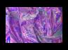 Purple  by MissToxicSlime