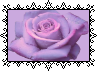 Purple Rose by MissToxicSlime