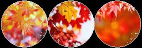 Condica de prezenta - Page 27 Autumn_leaves_by_virus_xenon_dclcscj-fullview.png?token=eyJ0eXAiOiJKV1QiLCJhbGciOiJIUzI1NiJ9.eyJzdWIiOiJ1cm46YXBwOjdlMGQxODg5ODIyNjQzNzNhNWYwZDQxNWVhMGQyNmUwIiwiaXNzIjoidXJuOmFwcDo3ZTBkMTg4OTgyMjY0MzczYTVmMGQ0MTVlYTBkMjZlMCIsIm9iaiI6W1t7ImhlaWdodCI6Ijw9OTciLCJwYXRoIjoiXC9mXC8yZjVjZjIyNS0zZmVkLTQyZTItODE5YS02Yjk2NjIyZTQzNGZcL2RjbGNzY2otNjFkNjU1YjMtNTRlOS00Y2U2LTlkODItNDgxZTFhMzgzMzY4LnBuZyIsIndpZHRoIjoiPD0yODcifV1dLCJhdWQiOlsidXJuOnNlcnZpY2U6aW1hZ2Uub3BlcmF0aW9ucyJdfQ