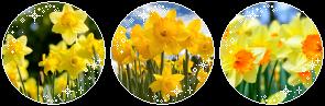 Boku no Hero Academia Daffodils_by_x0_nox_0x_dclhq4k-fullview.png?token=eyJ0eXAiOiJKV1QiLCJhbGciOiJIUzI1NiJ9.eyJzdWIiOiJ1cm46YXBwOjdlMGQxODg5ODIyNjQzNzNhNWYwZDQxNWVhMGQyNmUwIiwiaXNzIjoidXJuOmFwcDo3ZTBkMTg4OTgyMjY0MzczYTVmMGQ0MTVlYTBkMjZlMCIsIm9iaiI6W1t7ImhlaWdodCI6Ijw9OTciLCJwYXRoIjoiXC9mXC8yZjVjZjIyNS0zZmVkLTQyZTItODE5YS02Yjk2NjIyZTQzNGZcL2RjbGhxNGstM2YyNGNmNDUtZjkxMS00M2E3LTkzNzAtMjUzODFkOTc5ZWIyLnBuZyIsIndpZHRoIjoiPD0yOTUifV1dLCJhdWQiOlsidXJuOnNlcnZpY2U6aW1hZ2Uub3BlcmF0aW9ucyJdfQ
