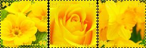 https://images-wixmp-ed30a86b8c4ca887773594c2.wixmp.com/f/2f5cf225-3fed-42e2-819a-6b96622e434f/dcly8cp-b56af4cc-f15e-42b2-9b6b-1011241a6f23.png/v1/fill/w_295,h_97,strp/yellow_aesthetic_divider_by_glitchyxenon_dcly8cp-fullview.png?token=eyJ0eXAiOiJKV1QiLCJhbGciOiJIUzI1NiJ9.eyJzdWIiOiJ1cm46YXBwOiIsImlzcyI6InVybjphcHA6Iiwib2JqIjpbW3siaGVpZ2h0IjoiPD05NyIsInBhdGgiOiJcL2ZcLzJmNWNmMjI1LTNmZWQtNDJlMi04MTlhLTZiOTY2MjJlNDM0ZlwvZGNseThjcC1iNTZhZjRjYy1mMTVlLTQyYjItOWI2Yi0xMDExMjQxYTZmMjMucG5nIiwid2lkdGgiOiI8PTI5NSJ9XV0sImF1ZCI6WyJ1cm46c2VydmljZTppbWFnZS5vcGVyYXRpb25zIl19.HwY1edG79mSt2EXJywGhbNiG61CmGHpCy498MU5QM0s