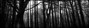 Dark Forest Divider 2