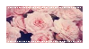 Pnk Roses by CosmicStardustTea