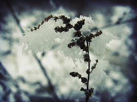 The cold is gone by dianora
