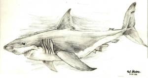 SHARK by TigerGod