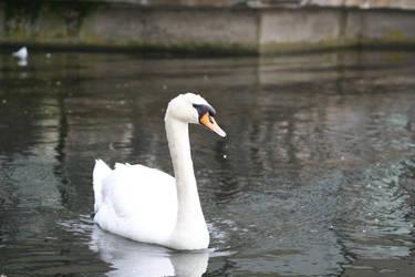 Swan Duke by ViRuS2002EnG