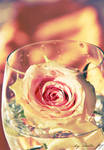 rose in the glas by coolke