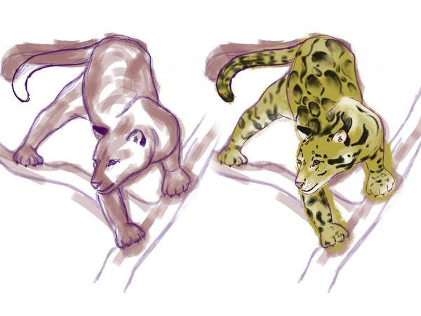 WIP - Clouded Leopard Sketch by carowi