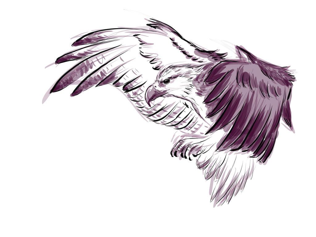 Madagascar sea eagle sketch by carowi