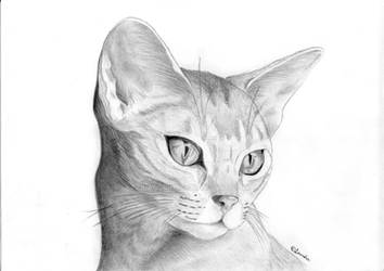 Abyssinian Cat by Lauridia