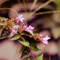 untitled flowers by orbitingasupernova