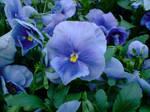 Celebrating Blue by LPeregrinus