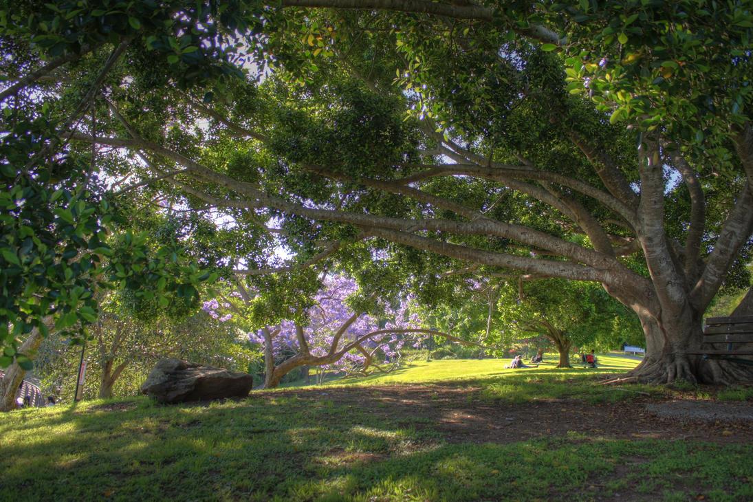 University of Queensland Lakes by LPeregrinus