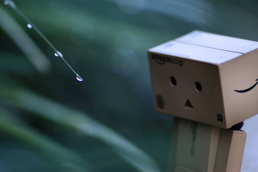 Contemplation of danbo