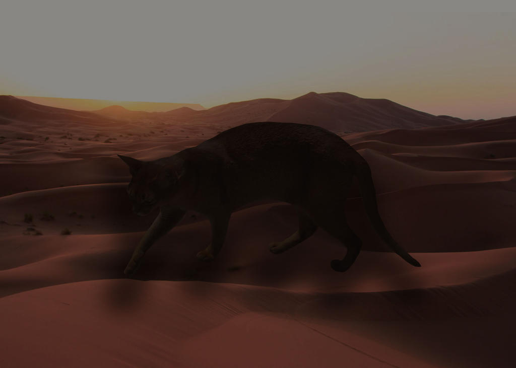Photoshop Practice no.1: Cat in the Desert by PriksCreep