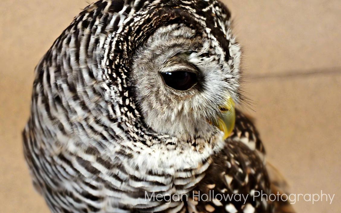 Owl Eye by Meggs255
