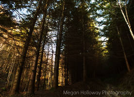Forest Walk (6 of 6) by Meggs255