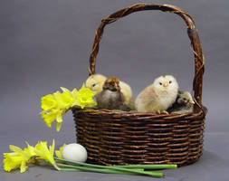Easter stock 1