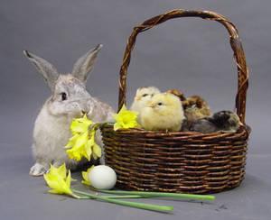 Easter stock 2
