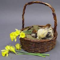 Easter stock 4