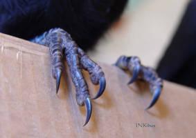 crow raven feet by InKi-Stock
