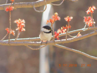 Bird on branch by AshlyFeral