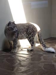 Snow Leopard by EPICNESSwolf