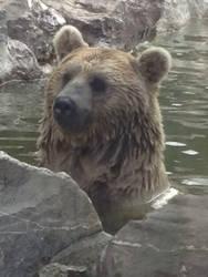 Bear by EPICNESSwolf
