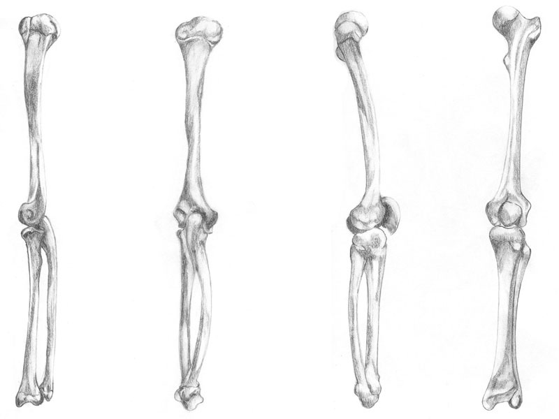 Human leg anatomy bones - animalcarecollege.info