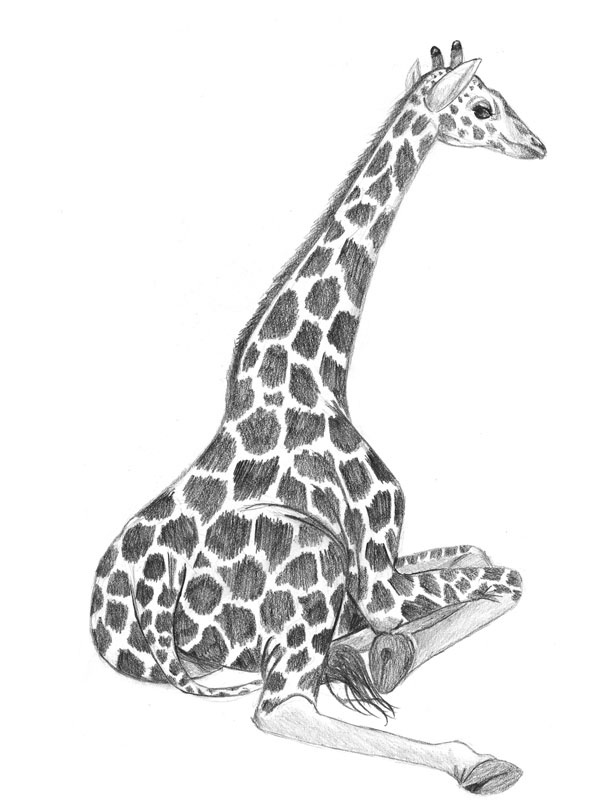 how to draw cartoon giraffe head